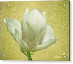 Outer Magnolia Acrylic Print by Jeff Kolker