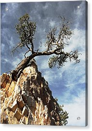 Acrylic Print featuring the photograph Hung Over by Natalie Ortiz