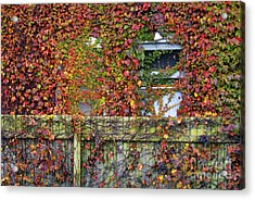 Over The Back Fence Acrylic Print by Paul W Faust -  Impressions of Light