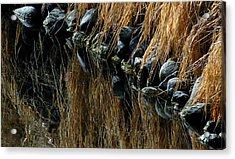 Over The Edge Acrylic Print by Steven Milner