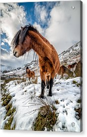 Over There Acrylic Print by Adrian Evans