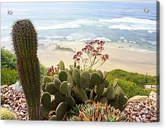 Overlooking San Elijo Beach Acrylic Print by Ann Patterson