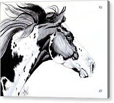 Overo Paint Horse Acrylic Print
