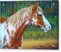 Acrylic Print featuring the mixed media Overo Paint Horse-colorful Warrior by Margaret Stockdale