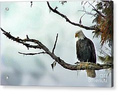 Overseeing Dinner Acrylic Print