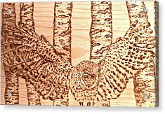 owl Acrylic Print by Art  Pyrography