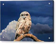 Owl At Dusk Acrylic Print
