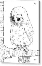 Owl Baby Acrylic Print by Callan Rogers-Grazado