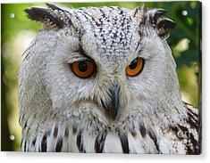 Acrylic Print featuring the photograph Owl Bird Animal Eagle Owl by Paul Fearn