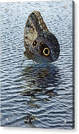 Owl Butterfly On Water Acrylic Print