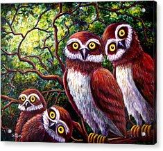 Owl Family Acrylic Print by Sebastian Pierre