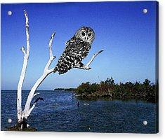 Owl In Dead Tree Acrylic Print by Fred Leavitt