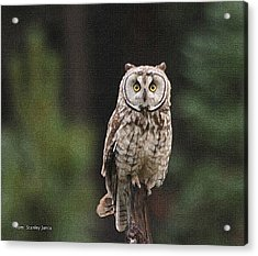 Owl In The Forest Visits Acrylic Print by Tom Janca