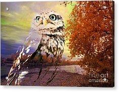 Owl In Wilderness Acrylic Print