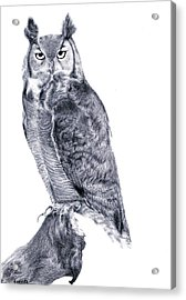 Owl Acrylic Print by Lucy D