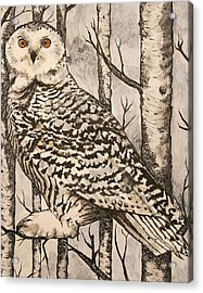 Owl Acrylic Print by Monica Warhol
