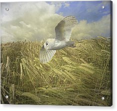 Acrylic Print featuring the photograph Owl On The Prowl by Roy  McPeak