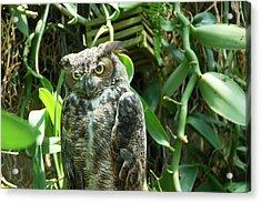 Owl Portrait 3 Acrylic Print