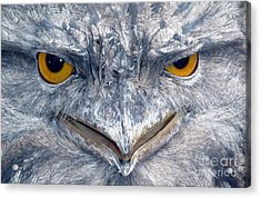 Owl Acrylic Print by Sandro Rossi