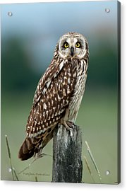 Owl See You Acrylic Print by Torbjorn Swenelius
