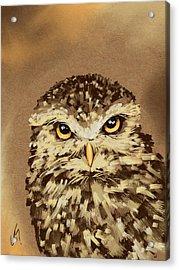 Owl Acrylic Print by Veronica Minozzi