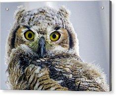 Owlet Close-up Acrylic Print