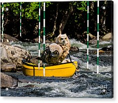Owlets In A Canoe Acrylic Print by Les Palenik