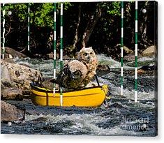 Owlets In A Canoe Acrylic Print