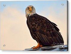 Owlish I Acrylic Print