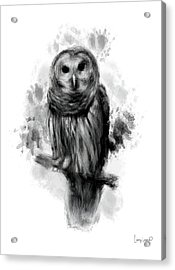 Owl's Portrait Acrylic Print