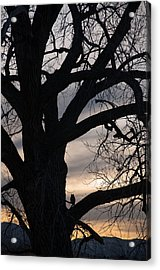 Owls Roost Acrylic Print by Eric Rundle
