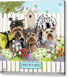 Owned By Yorkies II Acrylic Print