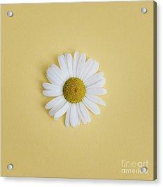 Oxeye Daisy Square Yellow Acrylic Print