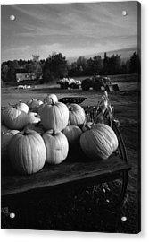 Oxford Pumpkins Bw Acrylic Print