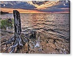 Oyster Bay Stump Sunset Acrylic Print