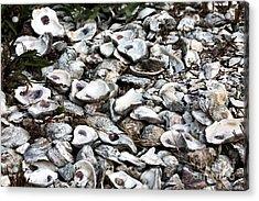 Oyster Shells Acrylic Print by John Rizzuto