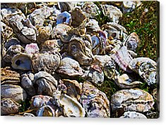 Oysters 01 Acrylic Print