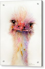 Ozzy The Ostrich Acrylic Print