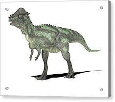 Pachycephalosaurus Dinosaur Acrylic Print