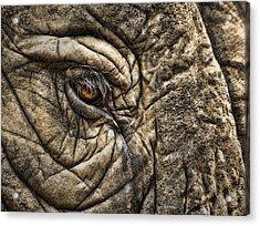 Pachyderm Skin Acrylic Print by Daniel Hagerman