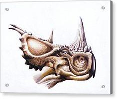 Pachyrhinosaurus Dinosaur Head Acrylic Print