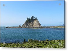 Pacific Coast At La Push Acrylic Print by Gayle Swigart