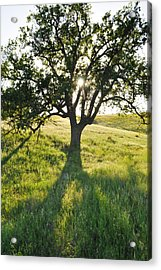 Acrylic Print featuring the photograph Pacific Coast Oak Malibu Creek by Kyle Hanson