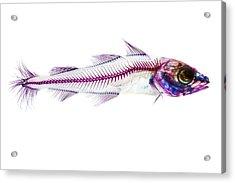 Pacific Cod Acrylic Print