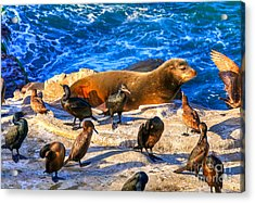 Acrylic Print featuring the photograph Pacific Harbor Seal by Jim Carrell