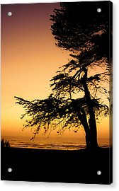 Pacific Acrylic Print by Mark Alder