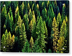 Acrylic Print featuring the photograph Pacific Northwest Autumn by Benjamin Yeager