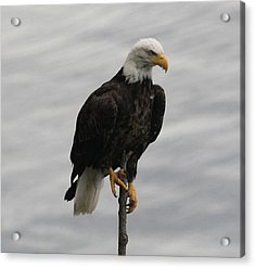 Pacific Northwest Eagle IIi Acrylic Print by Mary Gaines