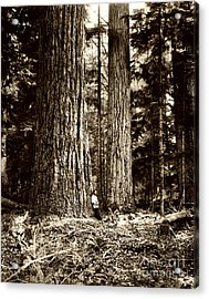 Pacific Old Growth Forest Acrylic Print