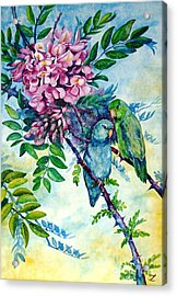 Pacific Parrotlets Acrylic Print